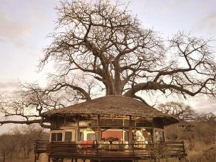 ELLE UK - Tarangire Treetops Lodge